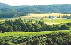 Bethel Heights Vineyard, Salem, Oregon