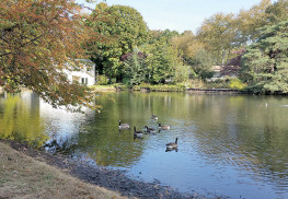Fair Haven officials have begun working on treating the borough's McCarter pond, which had been in danger of becoming overwhelmed by duckweed and other vegetation. Photo: Marion Lynch
