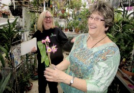 Connie Deren and Joan Mesander, both Middletown residents who are members of the Deep Cut Orchid Society, in Mesander's backyard greenhouse, filled with about 500 orchids. Photo: Joseph Sapia