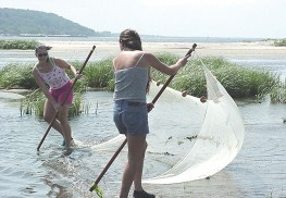Seining is a favorite activity for campers at Sandy Hook Bay.