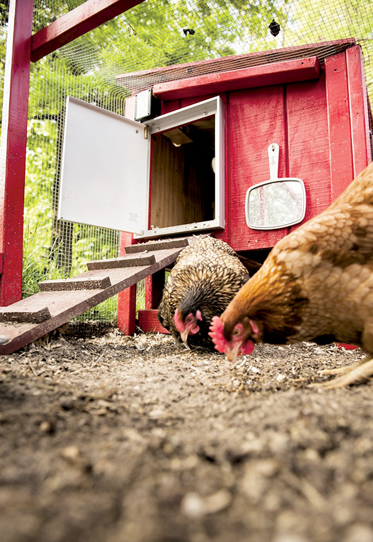 the two river times backyard chicken coops debated in oceanport