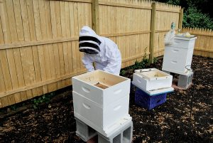 Pam Albert Devine of Little Silver finds beekeeping entertaining and educational.