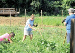 Jamie Morreale, center, volunteer coordinator for Soul Kitchen restaurant in Red Bank, weeds the Colts Neck garden where the restaurant grows vegetables.