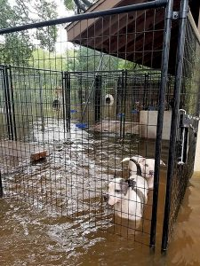 The Two River Times | Complications Hold Up Harvey Pet Delivery